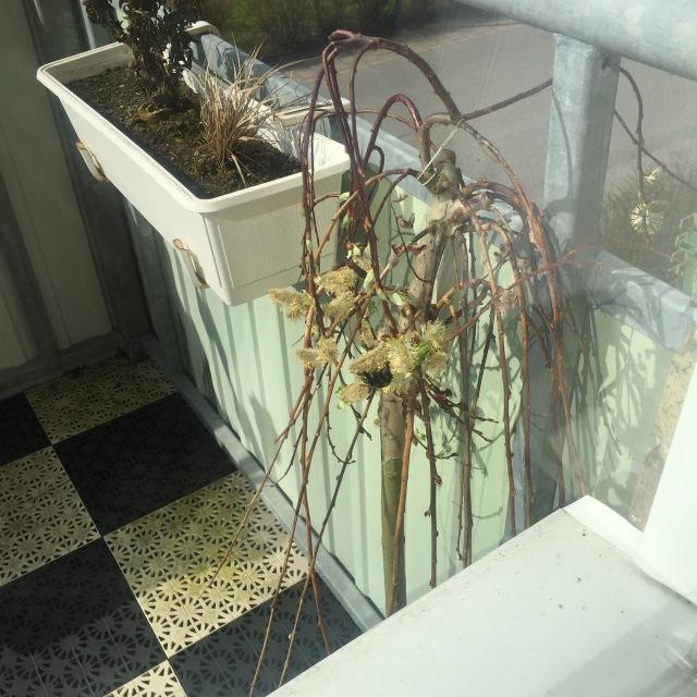 Våren har kommit till Trelleborg. Årets första humla är ute och kollar läget på min balkong.