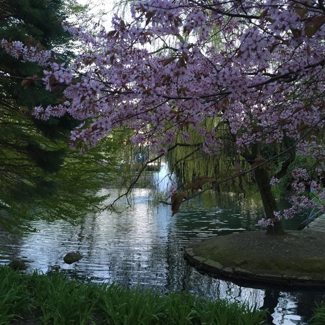 Vackert om våren i Stadsparken i Trelleborg
